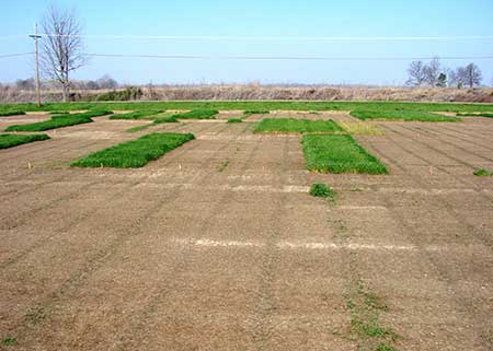 Control resistant weeds before spring planting