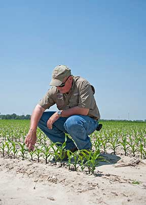 Seed treatments can reduce pest battles as crops grow