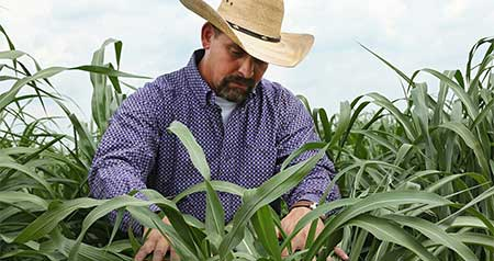 MSU forage tests help companies, producers