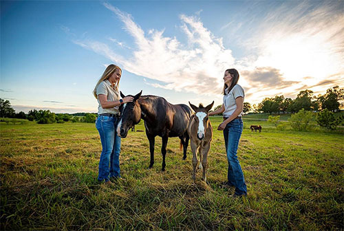 For MSU Equine Unit employees, foaling season offers solace during difficult times
