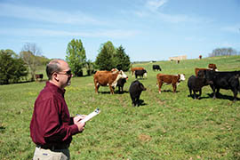scientist in field with cows