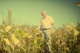 scientist in weedy soybean