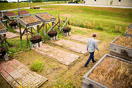 scientist walking between model green roofs