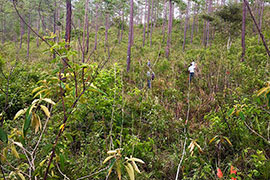 wooded area with scientists taking measurements