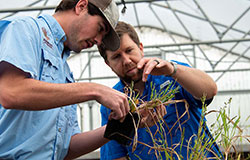 Weed science doctoral student Jake Patterson (left) and Dr. Connor Ferguson examine weeds grown in the greenhouse to determine herbicide effectiveness