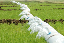 water from a polypipe irrigating rice