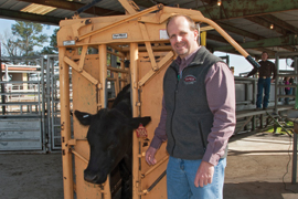 scientist with a cow in a cattle chute