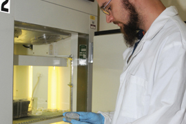 Student pursues development of toxin free castor