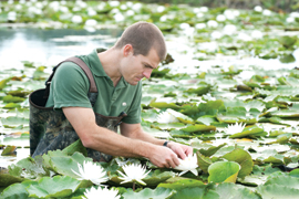 scientist looking at invasive plants in water