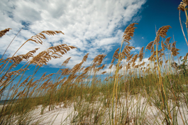 coastal dunes with blue sky