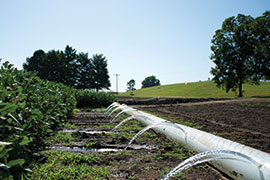 irrigating soybean with a poly pipe